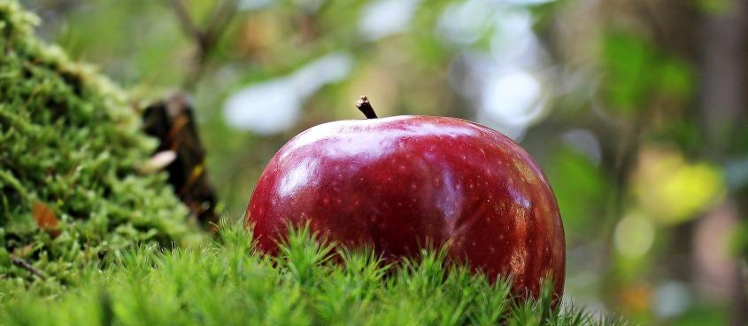 apple-1702338_1920