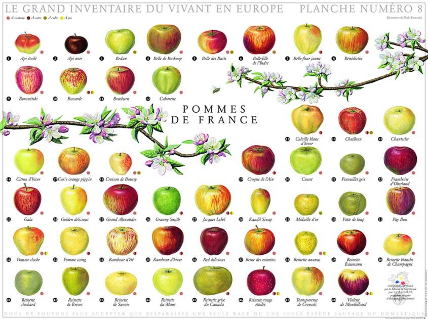 Pommes de France